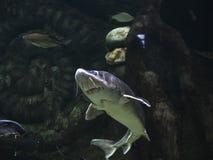 Mundo subaquático Oceanarium em Moscou Moskvarium Imagens de Stock Royalty Free