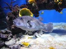 Mundo subaquático Oceanarium em Moscou Moskvarium Imagens de Stock