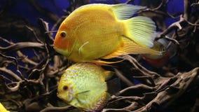 Mundo subaquático Peixes corais do Mar Vermelho Egypt video estoque