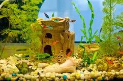 Mundo subaquático Peixes corais do Mar Vermelho Egypt Imagens de Stock Royalty Free