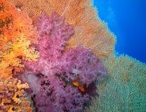 Mundo subaqu?tico nas ?guas profundas na flora das flores do recife de corais e das plantas em animais selvagens marinhos do mund fotografia de stock