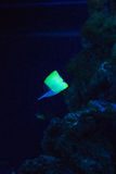 Mundo submarino Foto de Stock