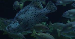 Mundo submarino diverso exibido no oceanarium video estoque