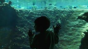 Mundo submarino, figura oscura del niño cerca del tanque subacuático grande con los pescados en agua potable almacen de video