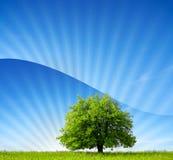 Mundo verde fotografia de stock royalty free