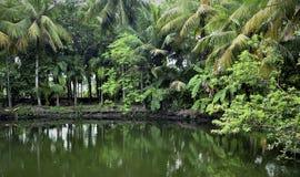 Mundo verde Imagen de archivo
