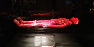 MUNDOS do CORPO no museu de Menschen imagem de stock royalty free
