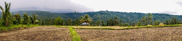 Munduk Rice Field in Bali, Indonesia. Panorama view of rice Field in Bali, Indonesia stock image