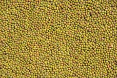 Mung bead. Mung bead background. Background material.Food. Mung bead background,food and oil advertising. zhaofuxin 2017.9 royalty free stock photography