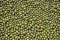 Mung bean. Is a very beneficial to human health food Royalty Free Stock Photography