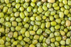 Free Mung Bean Royalty Free Stock Photography - 15881017