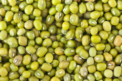 Mung bean Royalty Free Stock Image