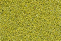 Mung bean. The background of mung bean Royalty Free Stock Image