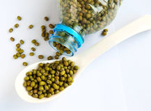 Mung bean Royalty Free Stock Photo