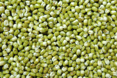 Mung bean Royalty Free Stock Photography
