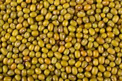 Mung bean background Stock Images