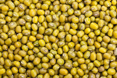 Mung bean background Stock Photography