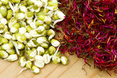 Mung bean and beetroot germinated sprouts. Green soy mung bean and red beetroot sprouts Royalty Free Stock Images