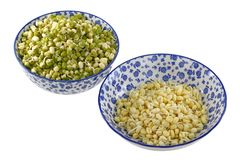 Mung Bean (Green gram) Sprouts Royalty Free Stock Image