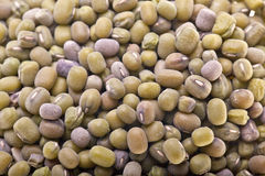 Mung bean, green soybeans seeds. Dry green soybeans seeds, mung beans seeds close-up Royalty Free Stock Photo