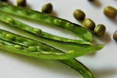 Mung bean. Vigna radiata, alternatively known as the moong bean, green gram in pod Stock Photography
