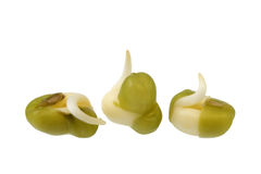 Mung bean sprouting Royalty Free Stock Photography