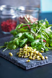 Mung bean sprouts on dark background Royalty Free Stock Photos