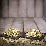 Mung bean sprouts Royalty Free Stock Images