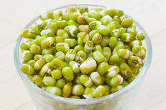 Mung bean sprouts Stock Images