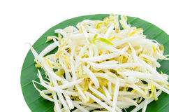 Mung bean Sprouts on green leaf. Stock Image