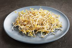 Mung Bean Sprouts on a plate Royalty Free Stock Photo