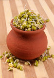 Mung bean sprouts on pot with wooden backdrop Stock Photography
