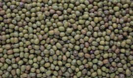 Mung bean, Vigna radiata. Also Jerusalem bean, mung dal Royalty Free Stock Image