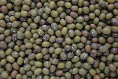 Mung bean, Vigna radiata. Also Jerusalem bean, mung dal Royalty Free Stock Images
