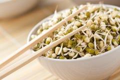 Mung beans Stock Image
