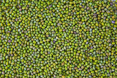 Mung beans background Stock Photos