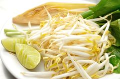 Mung beans or bean sprouts on white plates Stock Photography