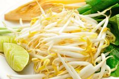 Mung beans or bean sprouts on white plates Stock Image