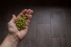Mung beans in the hand on wooden background Stock Images