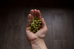 Mung beans in the hands on wooden background Royalty Free Stock Image