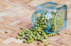 Mung Beans II Stock Images