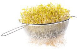 Sprouts of mung beans stock photos