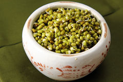 Mung beans Stock Images