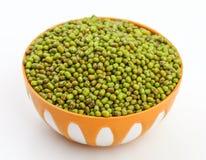 Mung Beans  Vigna aconitifolia Stock Image
