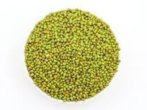 Mung Beans  Vigna aconitifolia Stock Images