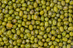 Mung Beans (Vigna radiata) Royalty Free Stock Photography