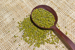 Mung beans Royalty Free Stock Photos