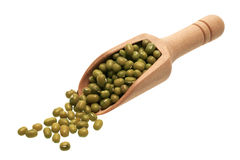 Mung beans in a wooden scoop Stock Photography