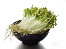 Mung beansprouts Royalty Free Stock Photography