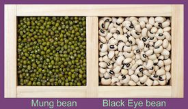 Mung and Black Eye Beans Stock Image